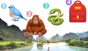 隱藏性格心理測驗!用猩猩、蛇、背包、小鳥測出你的價值觀