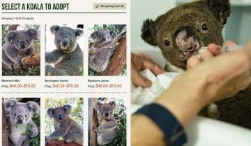澳洲山火恐令樹熊絕種!樹熊醫院助養計劃 7個簡易步驟申請 每月只需港幣$18
