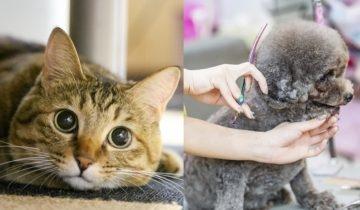 消委會寵物移民服務 把寵物換成病貓、性別更與針卡及單據不符 商戶質素十分參差