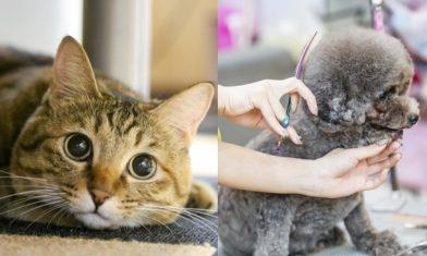 消委會寵物移民服務|把寵物換成病貓、性別更與針卡及單據不符 商戶質素十分參差