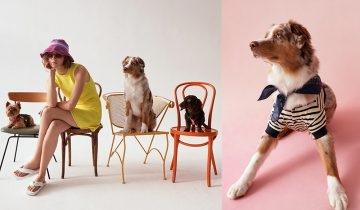 【放狗也要時尚】 ZARA網購新推寵物服飾系列